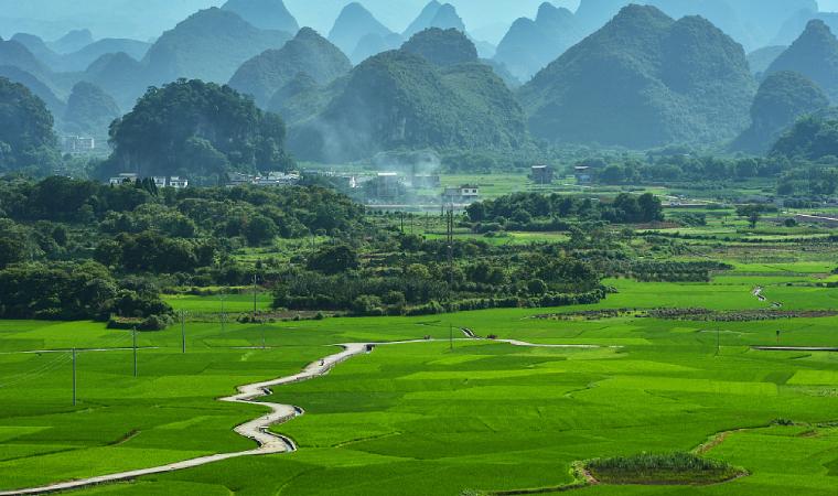 广西桂林延伸罗汉果产业链,罗汉果甜苷、浓缩汁等50多个产品畅销海外
